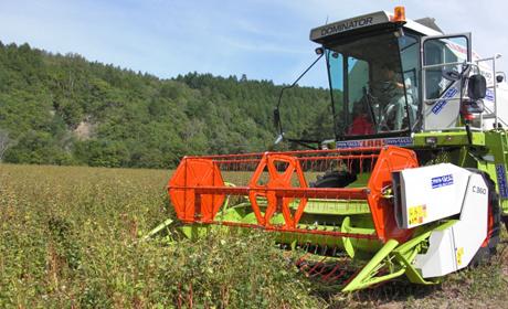 写真:収穫の様子